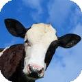 瘋狂的牛模擬器 v1.0安卓版