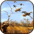 真實野鴨狩獵 v0.8.1安卓版