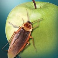 蟑螂模擬器 v1.0蘋果版