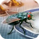 模擬蒼蠅生存 v1.0安卓版